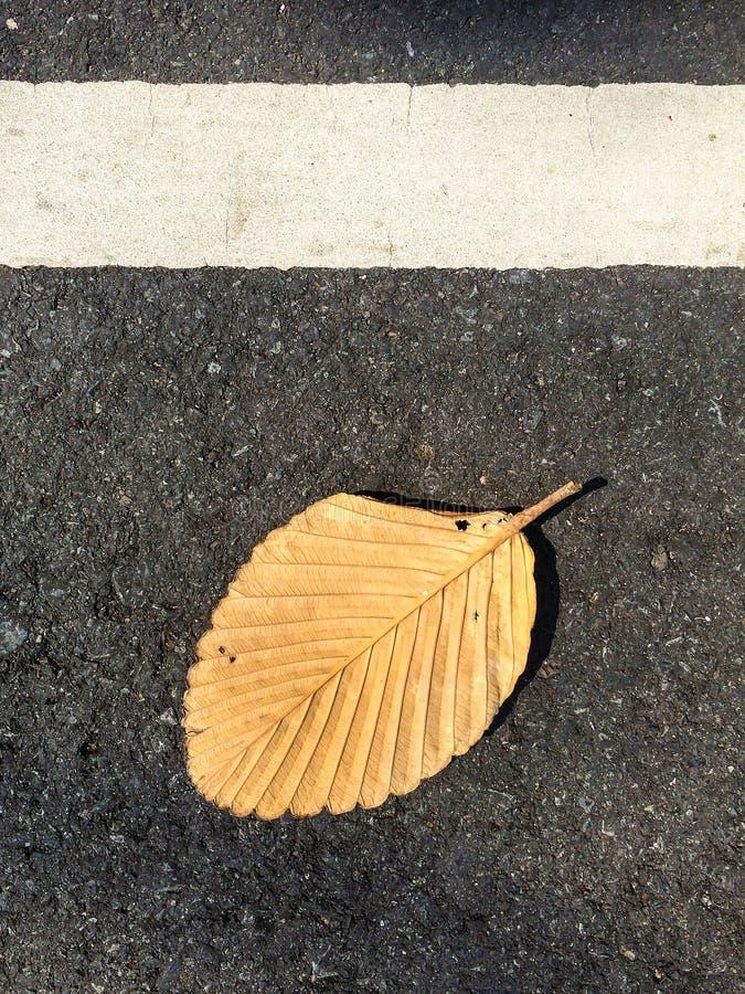 Droog de herfstblad op een wegachtergrond Abstracte achtergrond van de herfstbladeren De achtergrond van de herfst Rode en oranje stock foto's