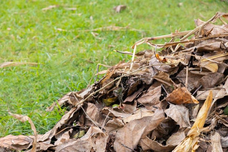 Droog doorbladert van bomen liggend op grond royalty-vrije stock fotografie