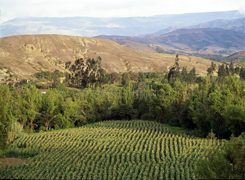Droog en groen (horizontaal) landschap stock afbeeldingen