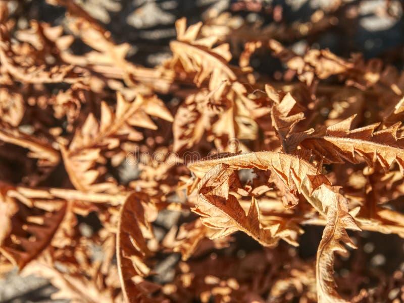Droog gebrande dode varenstelen op droge bos natuurlijke achtergrond royalty-vrije stock afbeeldingen