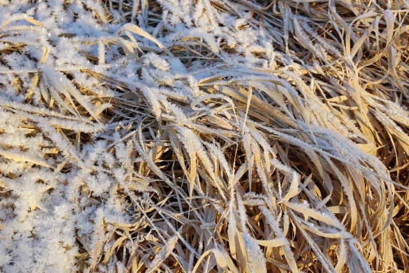 Droog geel die gras met de kristallen koud ijzig van de ijssneeuw close-up wordt behandeld als achtergrond royalty-vrije stock fotografie