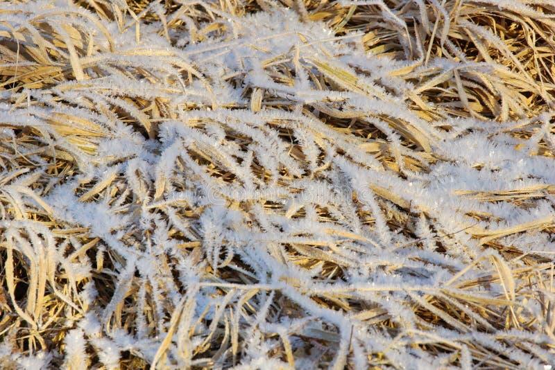 Droog geel die gras met de kristallen koud ijzig van de ijssneeuw close-up wordt behandeld als achtergrond stock foto's
