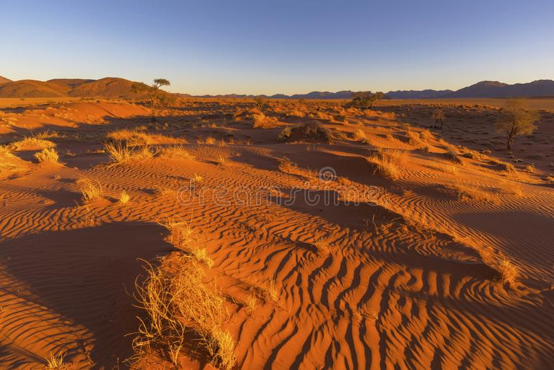 Droog geel gras en wind geveegde patronen in het zand royalty-vrije stock afbeeldingen