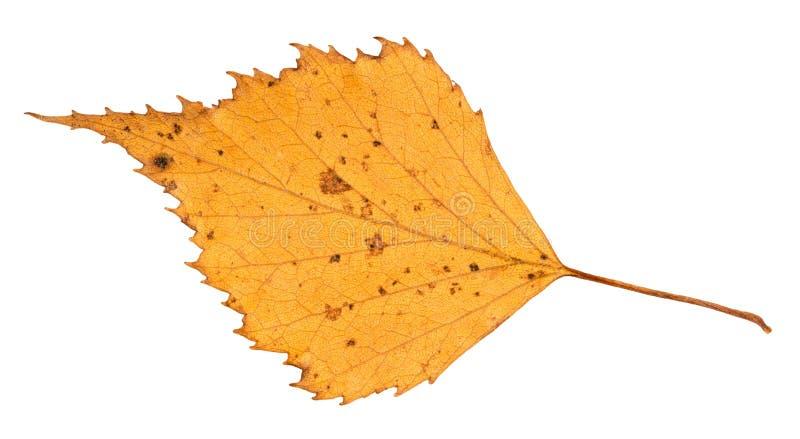 Droog geel verwijderd de herfstblad van berkboom royalty-vrije stock fotografie