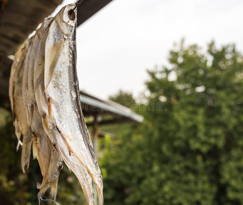Droog gezouten vissen in openlucht royalty-vrije stock afbeelding