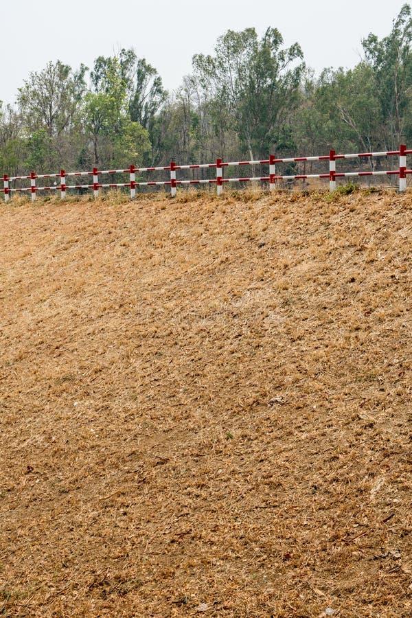 Droog gras stock afbeelding
