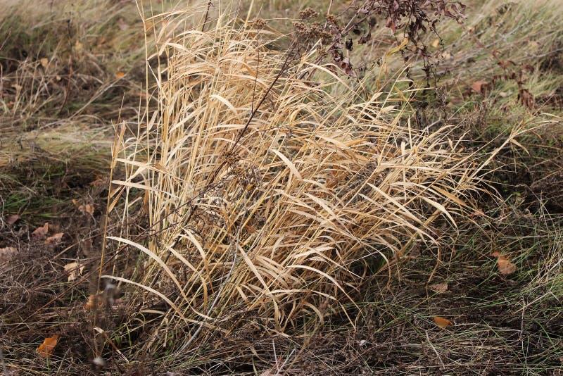 Droog gras in de herfst royalty-vrije stock foto