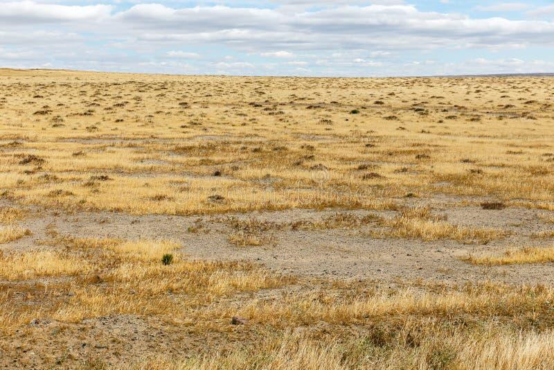 Droog gras in de steppe royalty-vrije stock foto