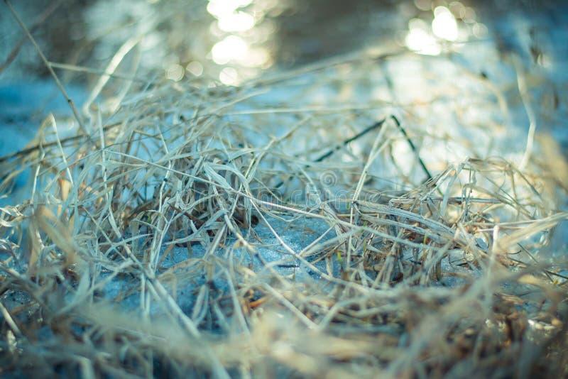 Droog gras in de vroege lente op een zonnige dag royalty-vrije stock foto's