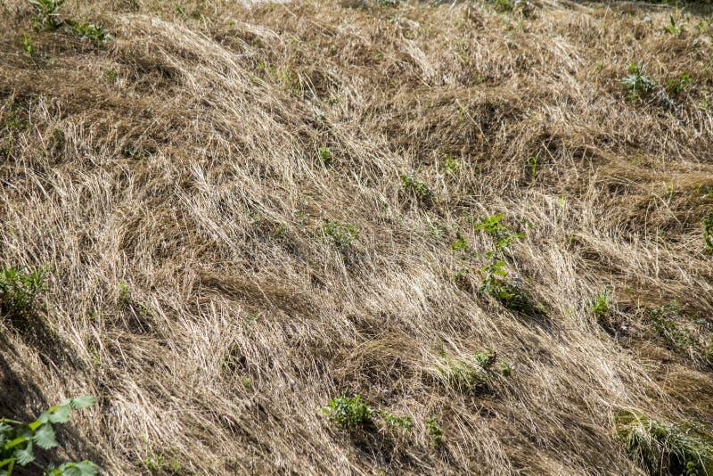 Droog gras in de weide stock foto
