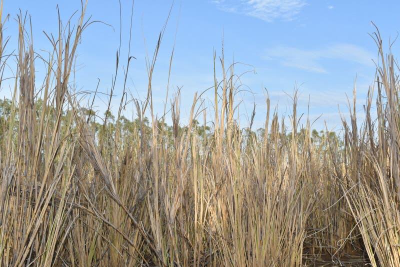 DROOG GRAS IN DIK BOS stock fotografie