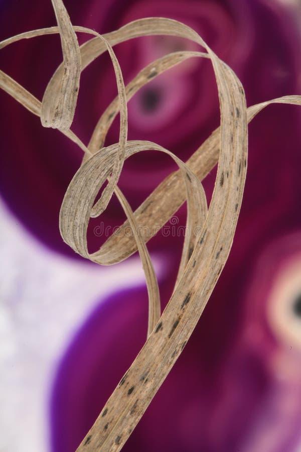 Droog Gras en Agaat stock afbeeldingen