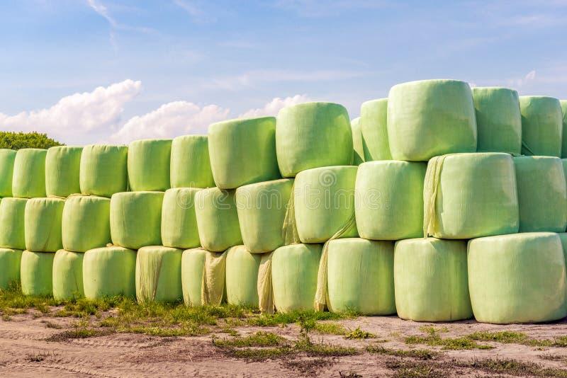 Droog gras in grote groene die balen op het gebied worden opgestapeld stock afbeeldingen