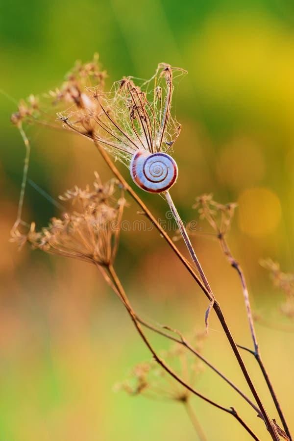 Droog gras met een kleine slak bij zonsondergang - close-up royalty-vrije stock fotografie