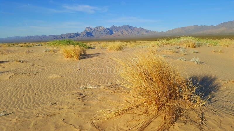 Droog gras in Mojave-woestijn met bergen op achtergrond en met duidelijke blauwe hemel royalty-vrije stock foto
