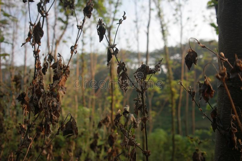 Droog gras op brakke riverbank royalty-vrije stock foto's