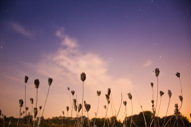 Droog gras op een gebied die zich in wind tegen diepe blauwe hemel met sterslepen bewegen en een wolk op een warm, nog en stille  royalty-vrije stock fotografie