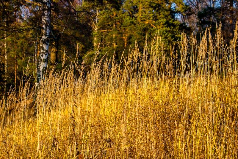 Droog gras op een heuvel in de zon stock afbeelding