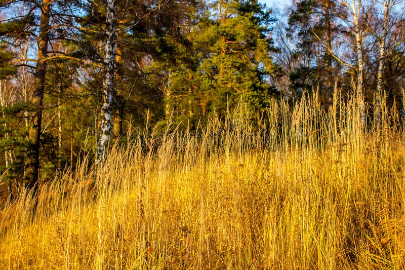 Droog gras op een heuvel in de zon royalty-vrije stock fotografie