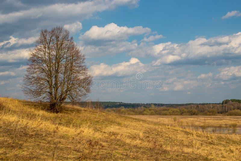 Droog gras op het gebied in de lente stock fotografie