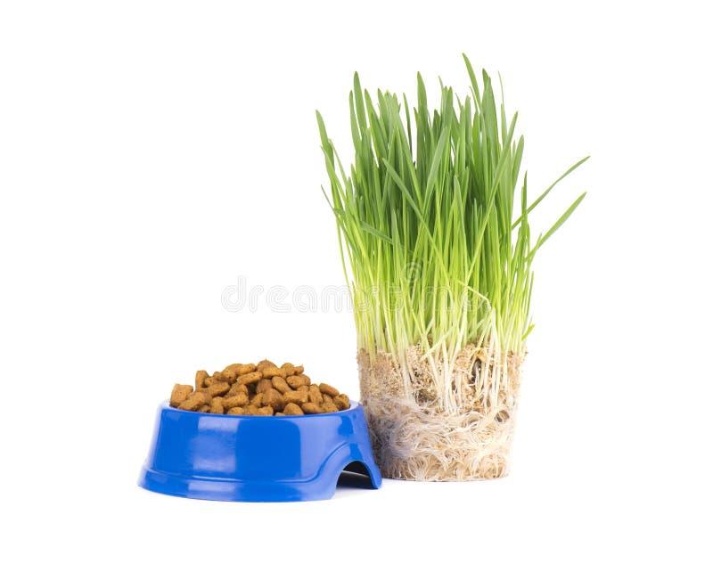 Droog kattenvoedsel in een blauwe kom Vers gras voor katten Geïsoleerdj op witte achtergrond royalty-vrije stock foto's