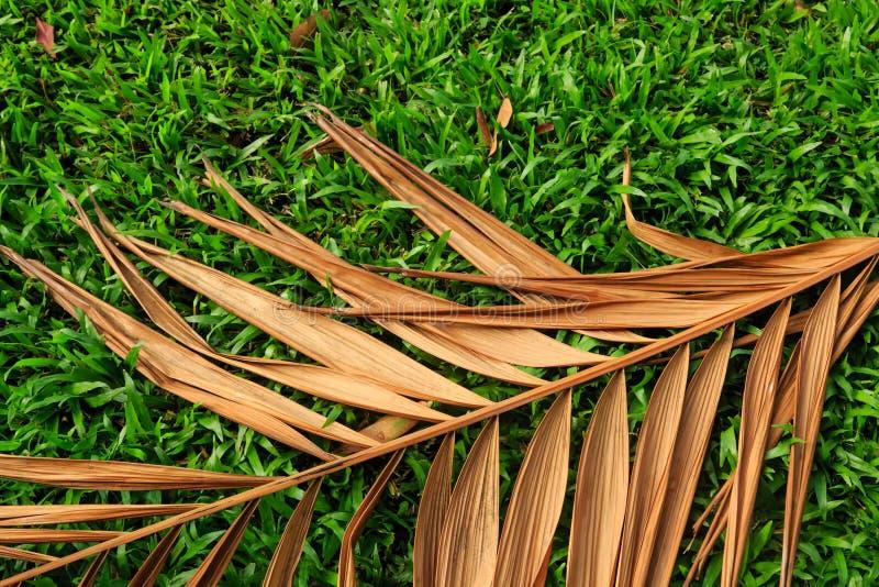 Droog kokosnotenblad op gazon stock afbeelding