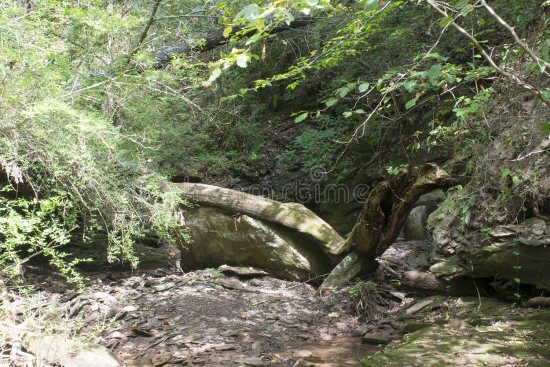 Droog kreekbed met gevallen bomen stock fotografie