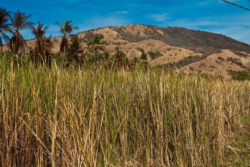 Droog Landschap één van tropisch eiland, Flores Indonesië royalty-vrije stock afbeeldingen