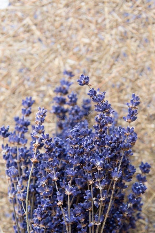 droog lavendelbloemen en boeket met lavendel royalty-vrije stock afbeelding