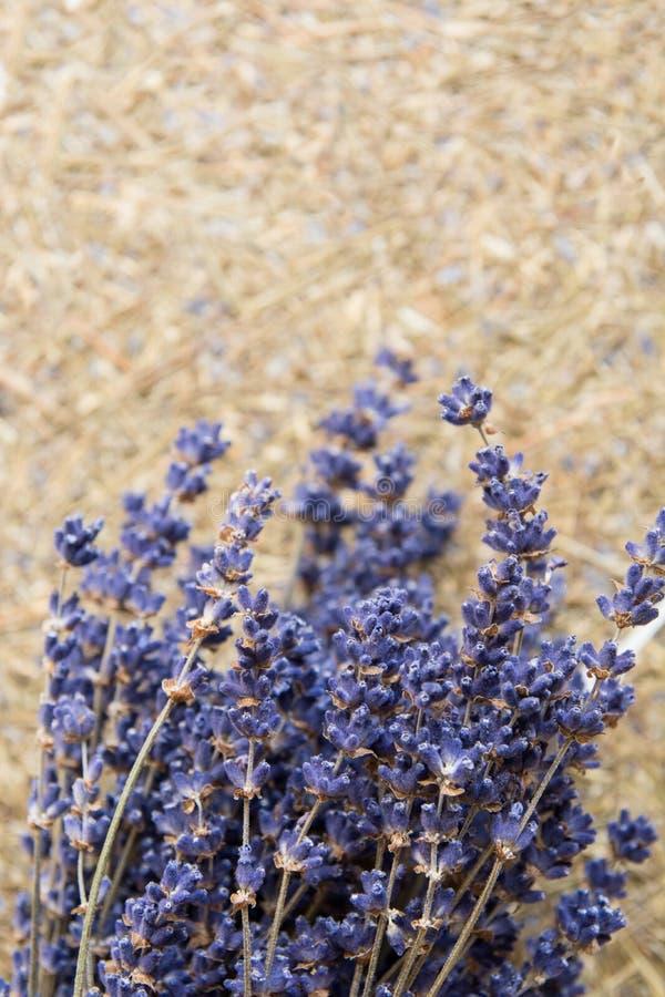 droog lavendelbloemen en boeket met lavendel stock afbeelding