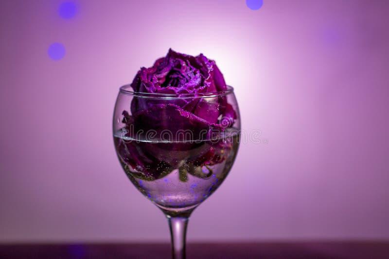 Droog nam in een wijnglas toe stock foto's