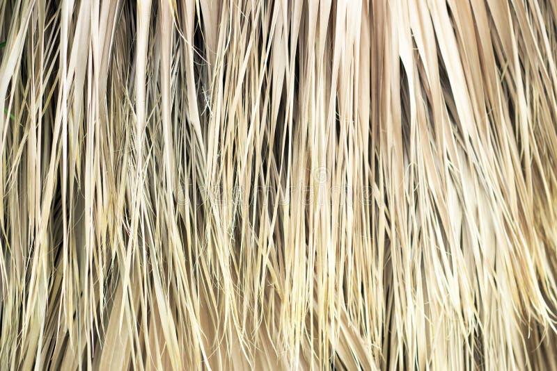 Droog palmbladenclose-up, textuur, achtergrond royalty-vrije stock fotografie