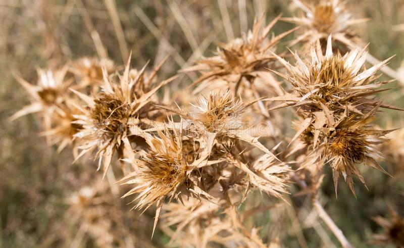 Droog stekelig gras in openlucht stock foto