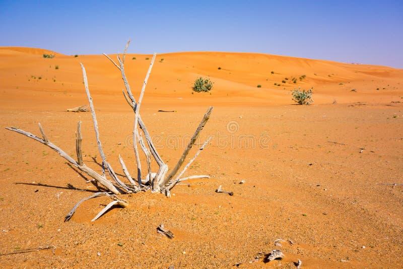 Droog stokken in rode Hatta-woestijn dicht bij Doubai royalty-vrije stock afbeeldingen