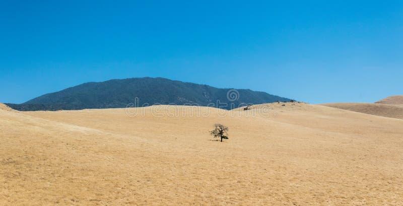 Droogte in Californië, de V.S. Droog gras op de heuvels royalty-vrije stock foto's
