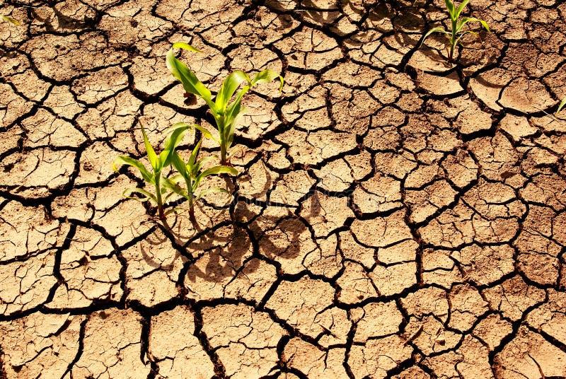 Droogte, installaties die in droge aarde groeit. stock fotografie