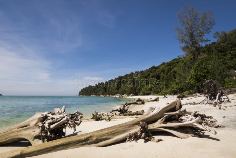 Droom geheim strand en dode bomen bij het Nationale Park van Tarutao, Thailand royalty-vrije stock foto's