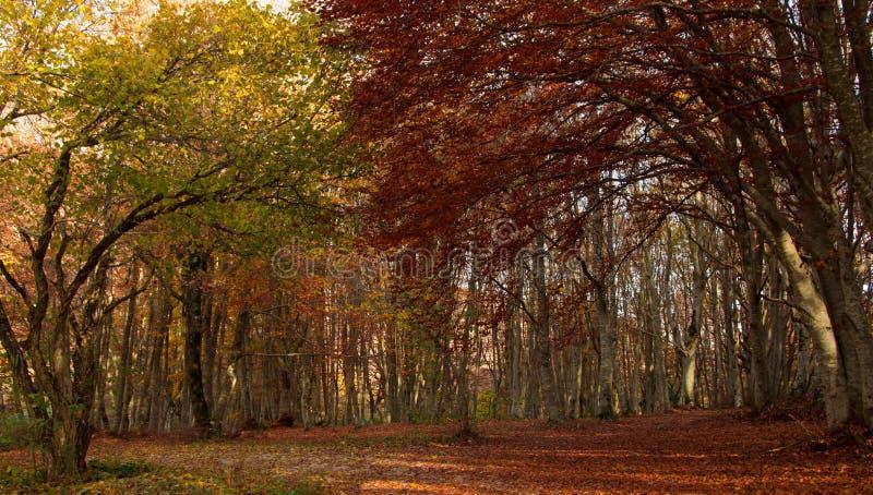 Droom van de herfst stock afbeeldingen