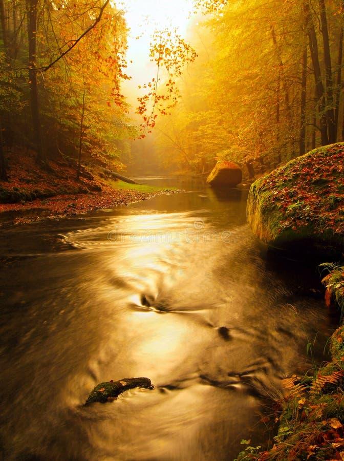 Droom van de rivier van de de herfstberg door oranje beukbladeren dat wordt behandeld Verse groene bladeren op takken hierboven - royalty-vrije stock afbeelding