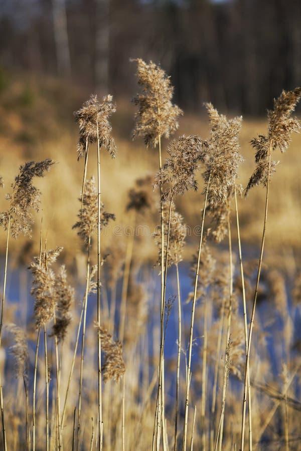 Droomgras in de vroege lente stock fotografie