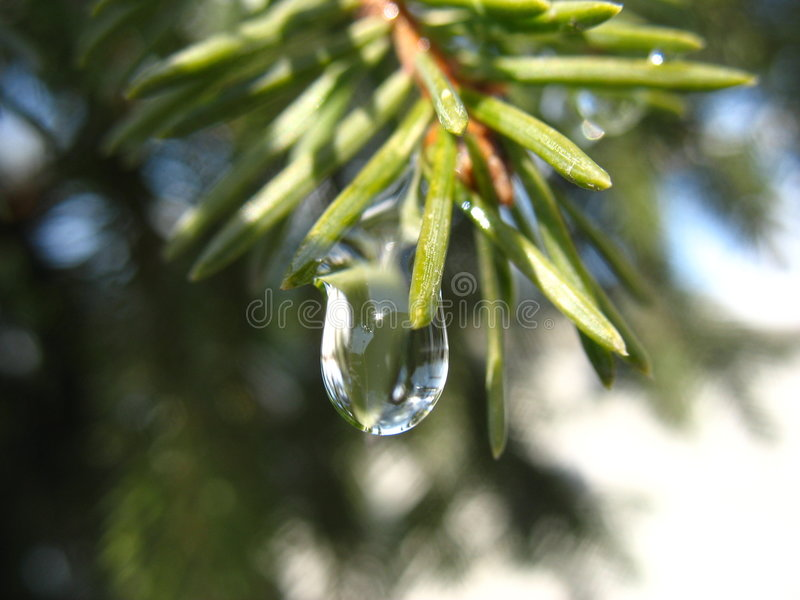 Drop. Early droplet stock images