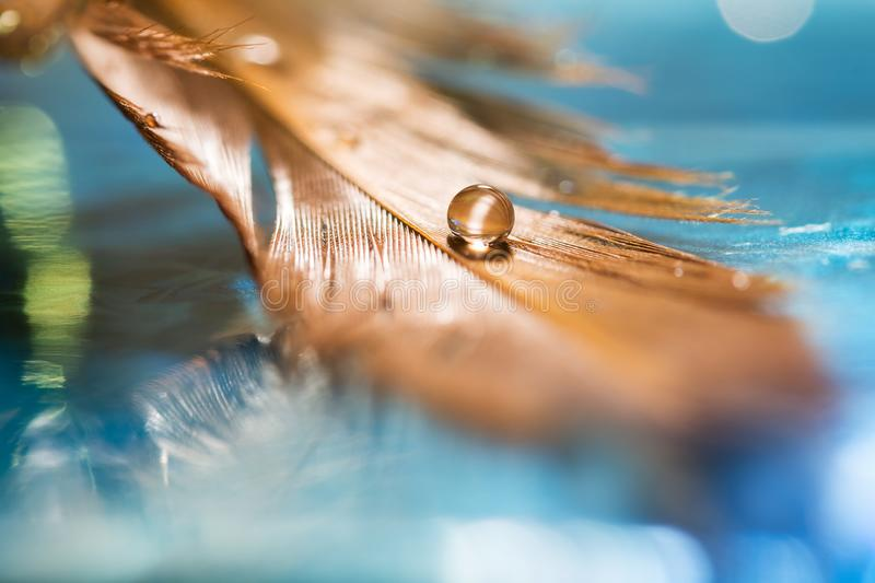A drop in the bird`s feather. Golden feather on a blue background. Art work. stock photo