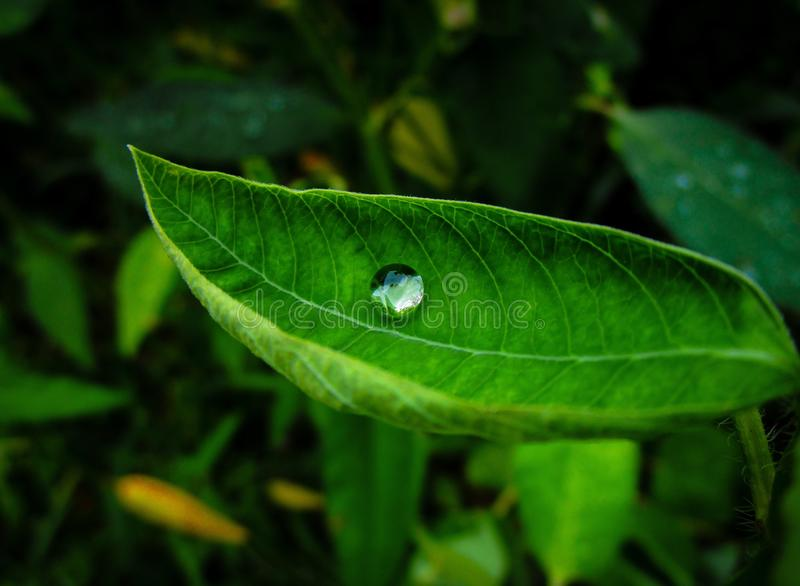 Drop of clean water on a green leaf stock photos