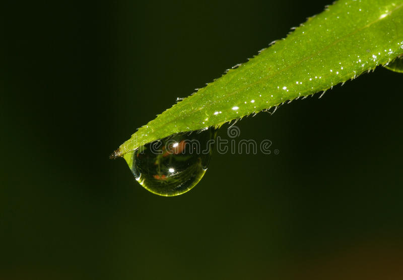 Drop of dew royalty free stock image