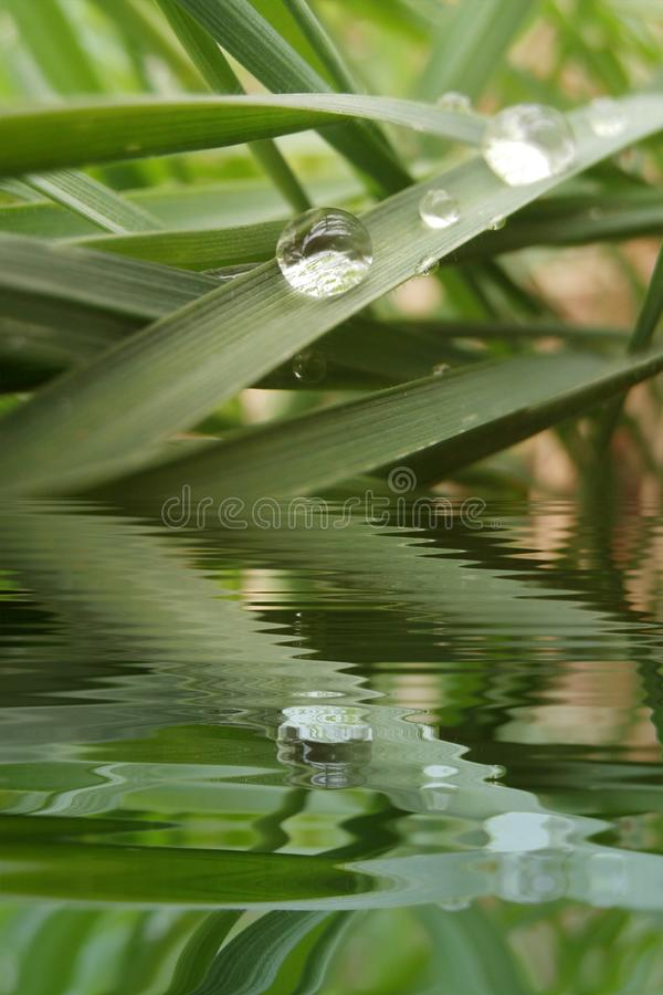 Drop of dew on grass with water refections stock photography
