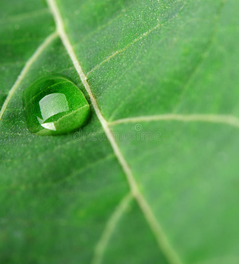 Download A drop of dew on a leaf stock image. Image of detailed - 26502865