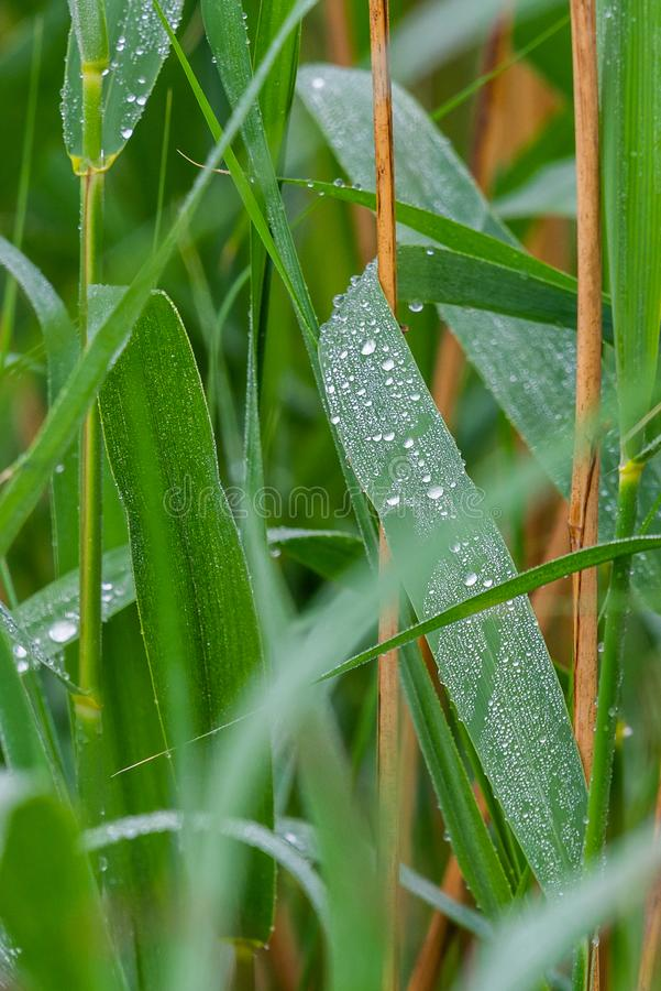 Drop of dew in morning on leaf royalty free stock photo