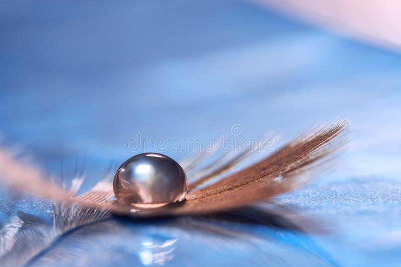 Drop on the feather. Abstract beautiful macro. Artistic image. stock images