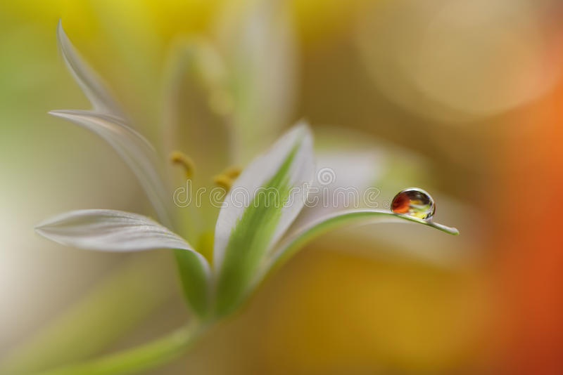 Drop,floral background closeup.Tranquil abstract art photography.Print for Wallpaper.Floral fantasy design.Nature,spring,yellow. Abstract macro photo with water stock photo