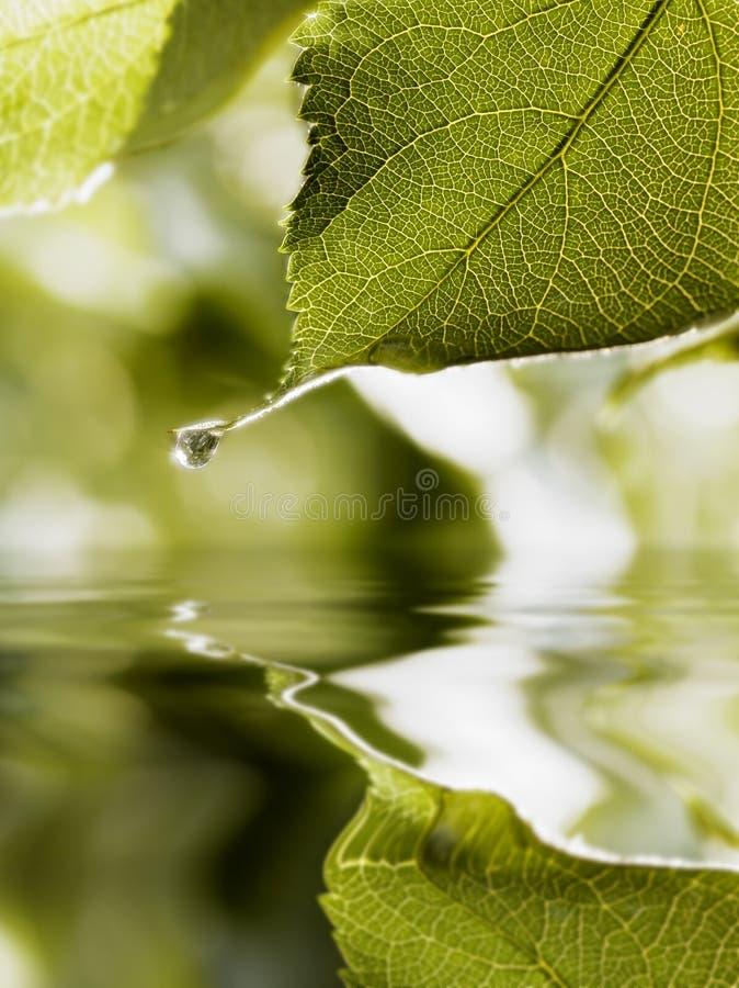 Download Drop hanging  on leaf tip stock image. Image of freshness - 3834655
